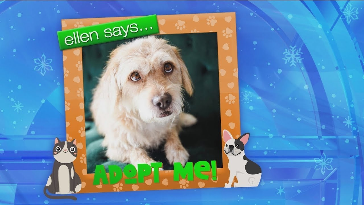 Get Your Paws on These Adoptable Pets!