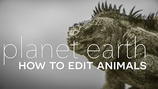 Planet Earth II: How to Edit Animals