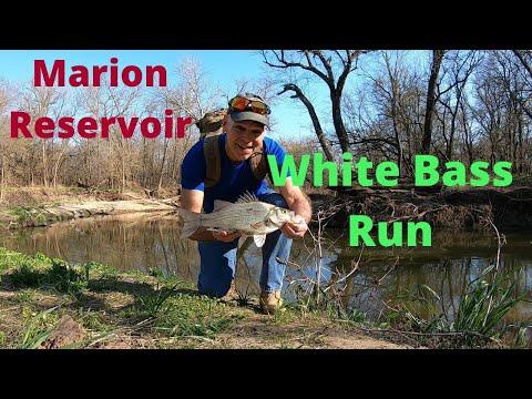 Marion Reservoir White Bass River Run Kansas Fishing