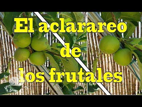 el-aclareo-de-los-frutales-para-mejorar-el-tamaño-y-calidad-de-la-fruta.