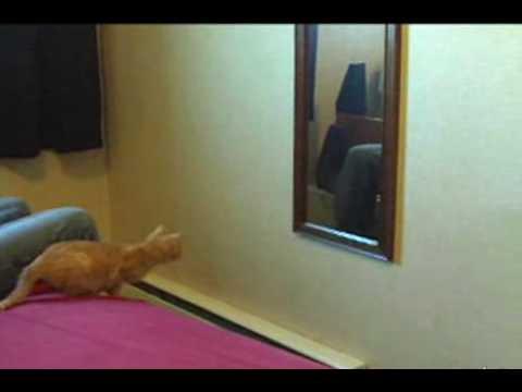 Chat vs miroir youtube for Miroir youtube