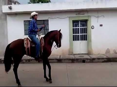 Caballo Azteca Nieto de Generoso XXXIII