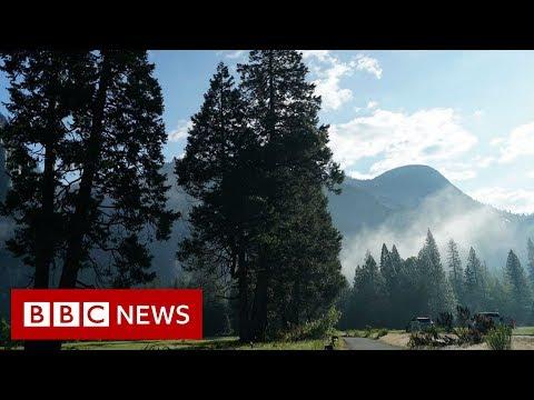 What's killing Yosemite's