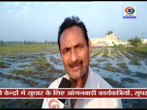 GROUND REPORT, UTTARAKHAND UDHAMSINGH NAGA PM FASAL BEEMA  YOJANA, 11 NOVEMBER 2018