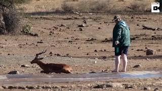 В Африке турист вытащил антилопу из болота