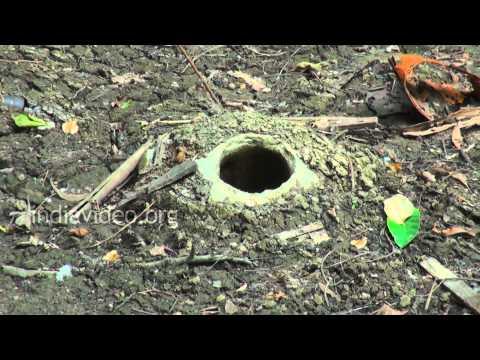 Bomb Pit, Ross Island