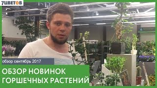 Обзор новинок горшечных растений в 7ЦВЕТОВ. Поставка от 12.09