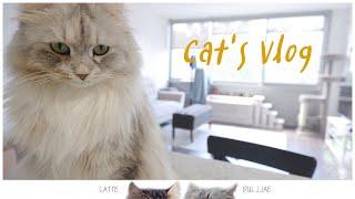 꾸밈없는 고양이 일상 : 염소유우먹기, 정수기 청소할때…