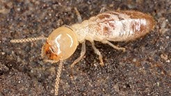 How To Get Rid Of Termites | Termite Damage | Termite Pest Control - Summit Environmental Solutions