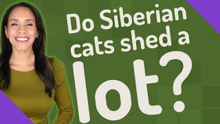 Do Siberian cats shed a lot?