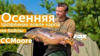 Карпфишинг TV: Осенняя трофейная ловля карпа на бойлы CCMoore