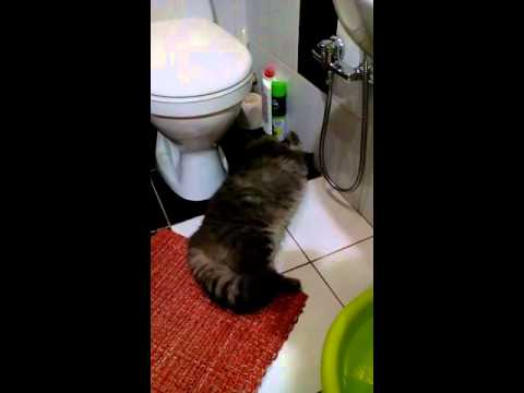 Вопрос: Почему кошка балдеет от запаха хлора?