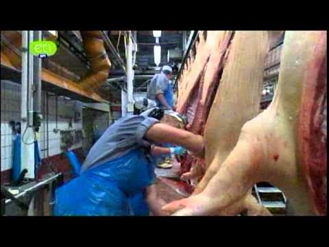 Pigs slaughterhouse.