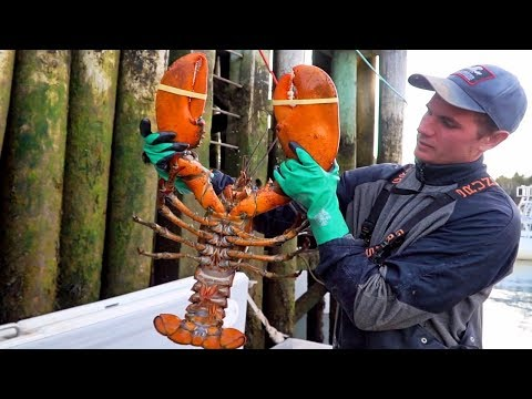 GIANT LOBSTER in Canada - SEAFOOD Catch & Cook in The Maritimes!! BEST Street Food in Canada!!