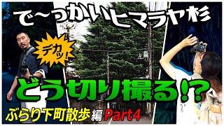 東京の下町・谷根千エリアをブラブラする2人が次に訪れたのは、 でっかい!ヒマラヤ杉 タン塩(単焦点)しか持ってきていない2人は どうこの杉を切り撮っていくのでしょうか ...