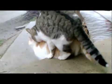 kedilerin aşkı ( +18)