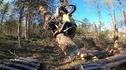 Tosi vanhaa metsää ja suuria levottomia puita. Ponsse Scorpion King H7. #120vuotiaitapuita