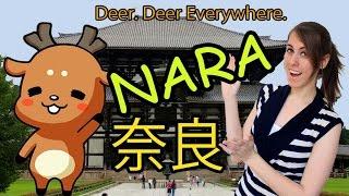 visiting nara deer park 奈良に行こう!