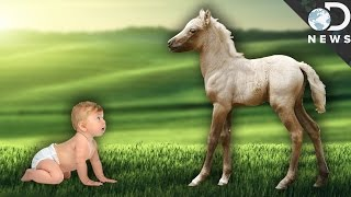 Why Can Newborn Animals Walk But We Can't?