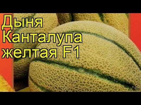 Дыня Канталупа желтая F1. Краткий обзор, описание характеристик, где купить семена cucumis melo