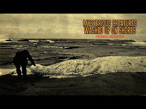 5 Mysterious Creatures Washed Up on Shores - YouTube