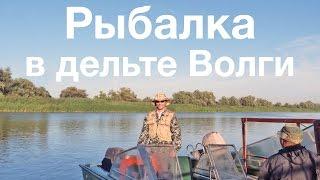Рыбалка в дельте Волги(Видео о нашей замечательной недельной рыбалке на нижней Волге под Астраханью., 2013-10-27T18:22:52.000Z)