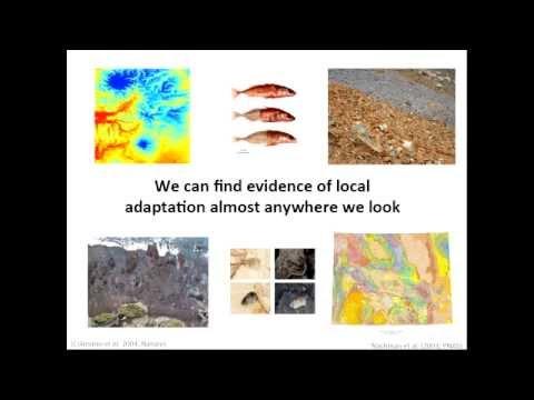 Using Individual-based Simulations to Model the Genomics of Adaptation