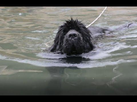 هل يستطيع كلب الانقاذ السباحه اليكم التجربه مع جمال العمواسي