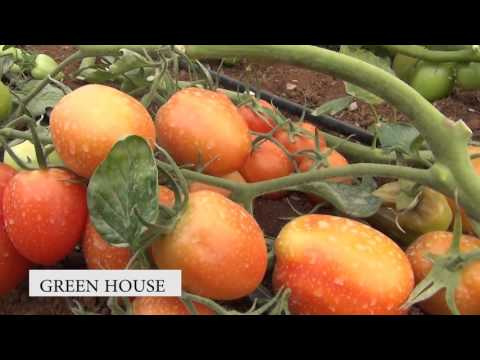 Green House Farming 2
