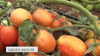 Green House Farming 2