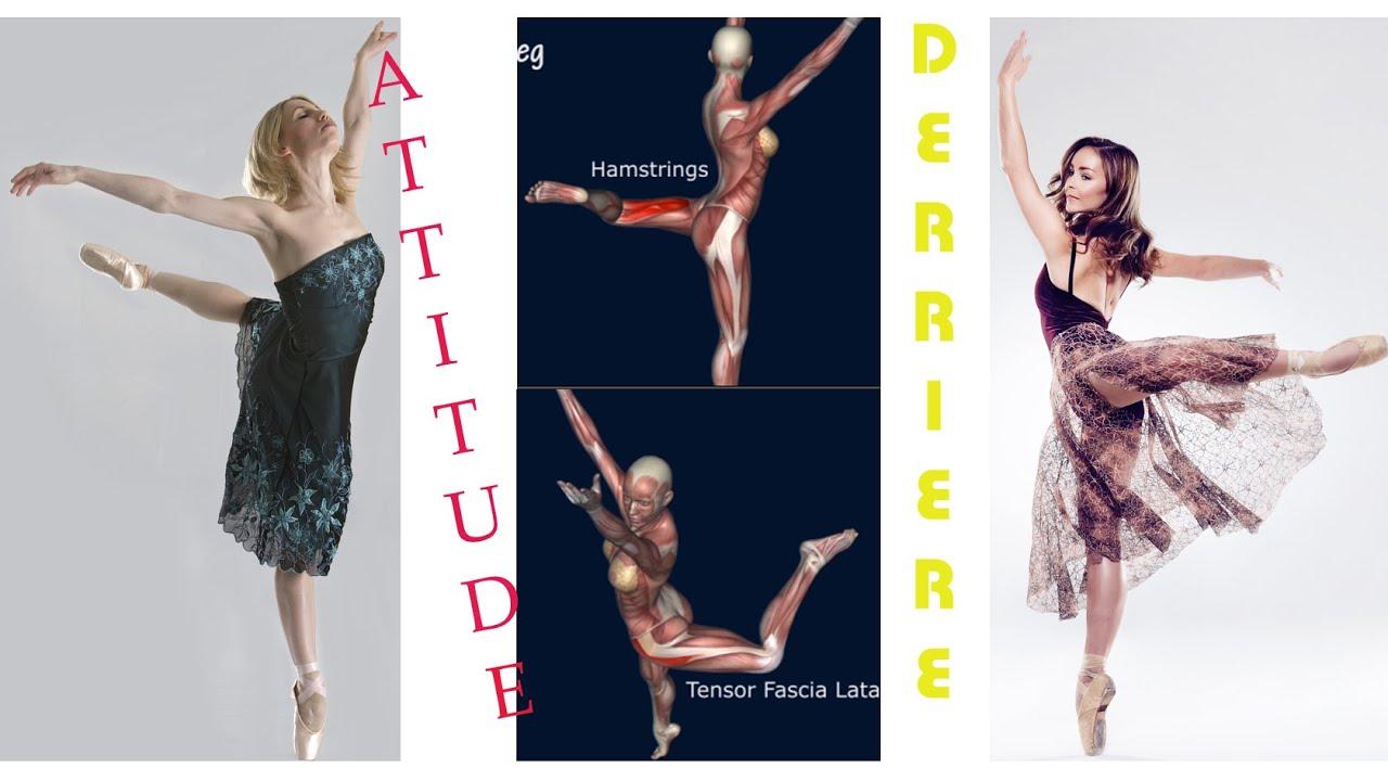Back Attitude Ballet Dance Muscle Diagram Animation EasyFlexibility  YouTube