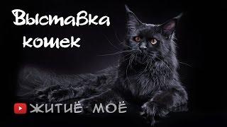 Выставка кошек в Сокольниках.