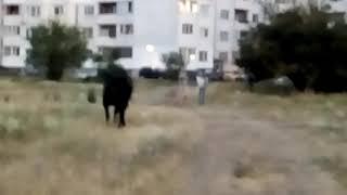 Отървахме коня