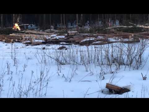 Гусеничный экскаватор Volvo 240 Харвестер валит деревья на делянке