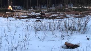Гусеничный экскаватор Volvo 240 Харвестер валит деревья на делянке(Гусеничный экскаватор Volvo 240 Харвестер валит деревья на делянке, обрезая их по шесть метров Аренда экскават..., 2016-03-11T12:07:49.000Z)