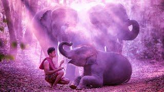 Meditation Music For Self Love | 432Hz Deep Healing | Instrumental Zen For Relax | Ancient Frequency