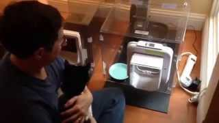 Training A Cat To Use The Meowspace - How To Keep Your Dog From Eating Your Cat's Food - Meowspace®