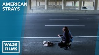 Caught On Camera Girls Find Dead Dogs on Detroit Highways & Rescue One - Hope For Dogs Like My DoDo