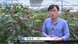 [목포MBC]복분자 익는 계절...수확 한창(R)