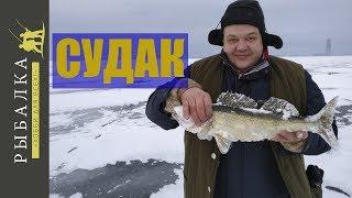 Ловля судака на Финском заливе. Зимняя рыбалка на раттлин