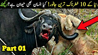 Top 10 Most Dangerous Animals in the World |Part 1|