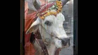 Reader's Theater Hindu Cows Sacred