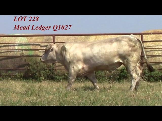 Mead Angus Lot 228