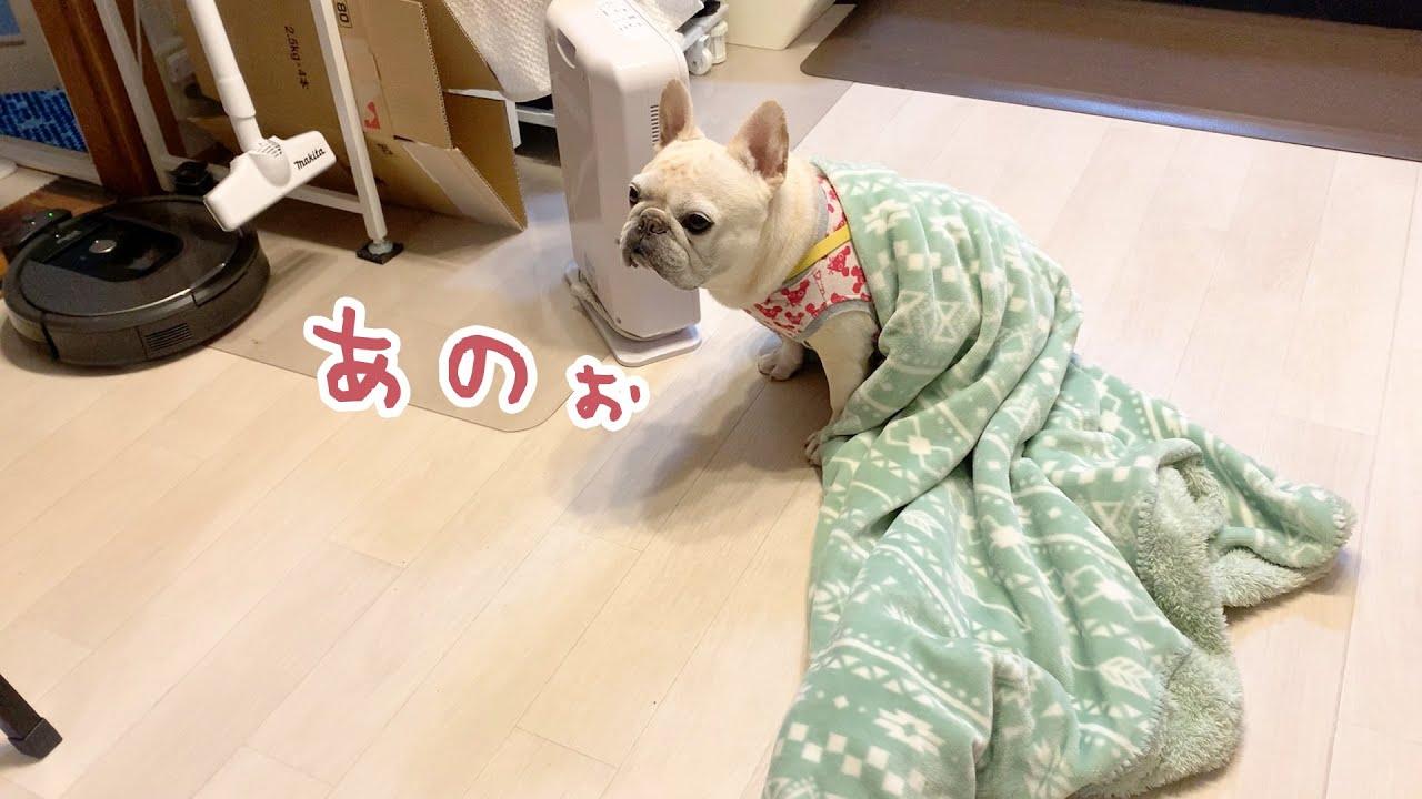 かわいい毛布ちゃんからのお願い