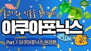 [수경재배] 아쿠아포닉스!? 물고기와 식물을 같이 기른…
