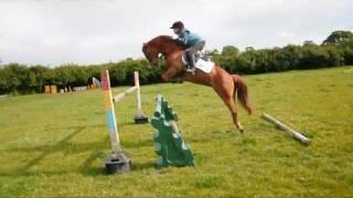 Honey the 13.1 pony  -  1.35m !