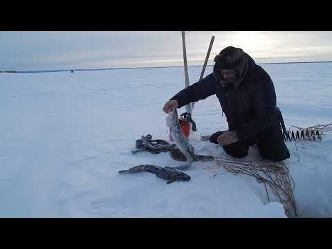 Рыбалка,улов и досада..
