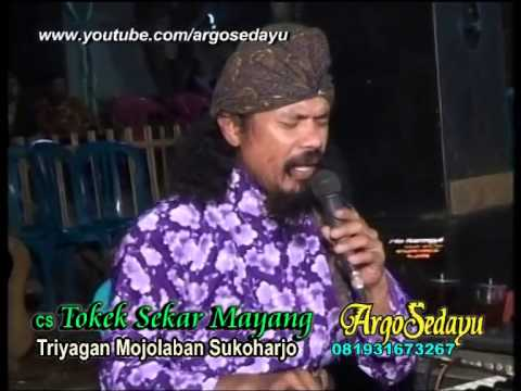 Tokek Sekar Mayang Sholawat Lir-iler mantap