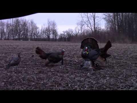 Crossbow Turkey Hunt 2018