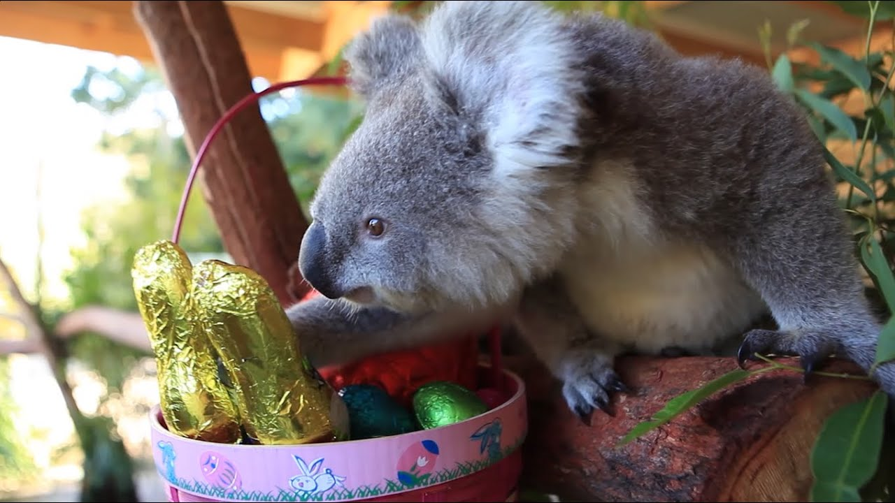 Cutest Ever Easter Zoo Animal Compilation